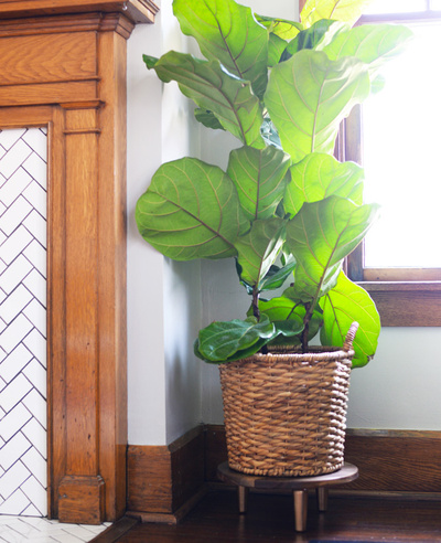 DIY midcentury inspired plant stand | Farm Fresh Therapy for The Nest.jpg