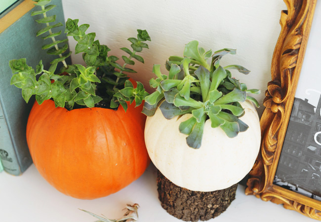 DIY pumpkin succulents | Farm Fresh Therapy for The Nest.jpg